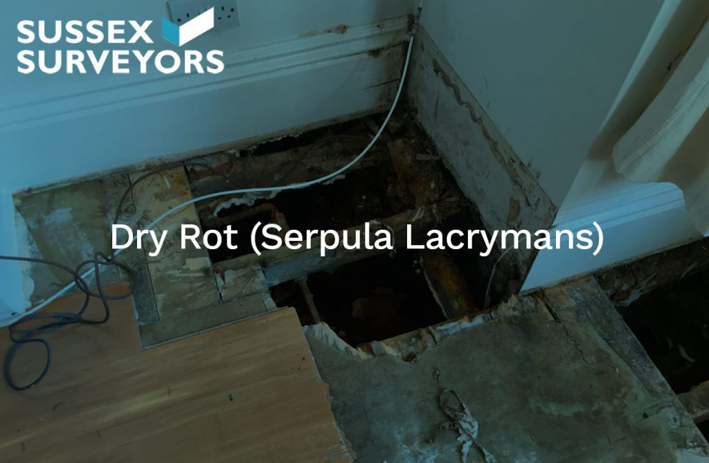 Dry Rot (Serpula Lacrymans)